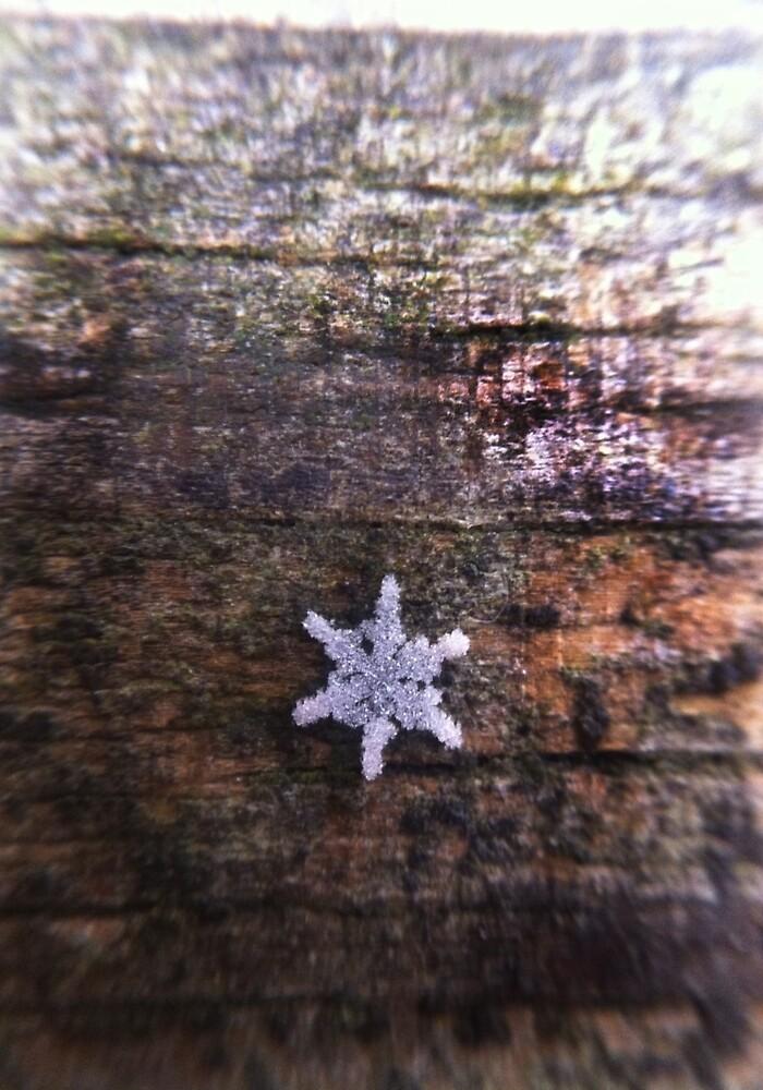 Snowflake by jberning