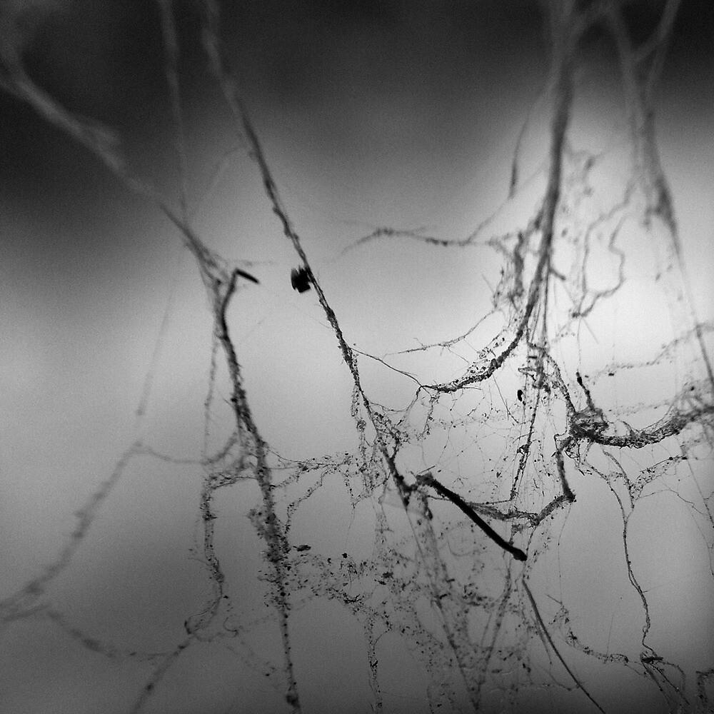 Cobweb Macro #1 by Jock Anderson
