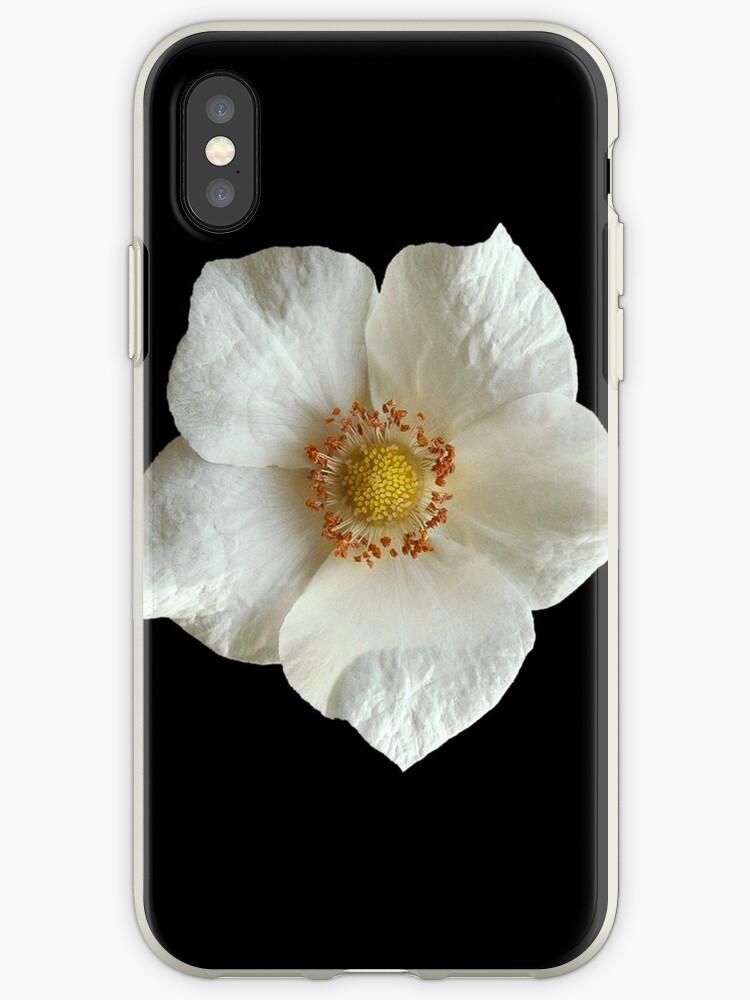 White Flower on Black by pjwuebker
