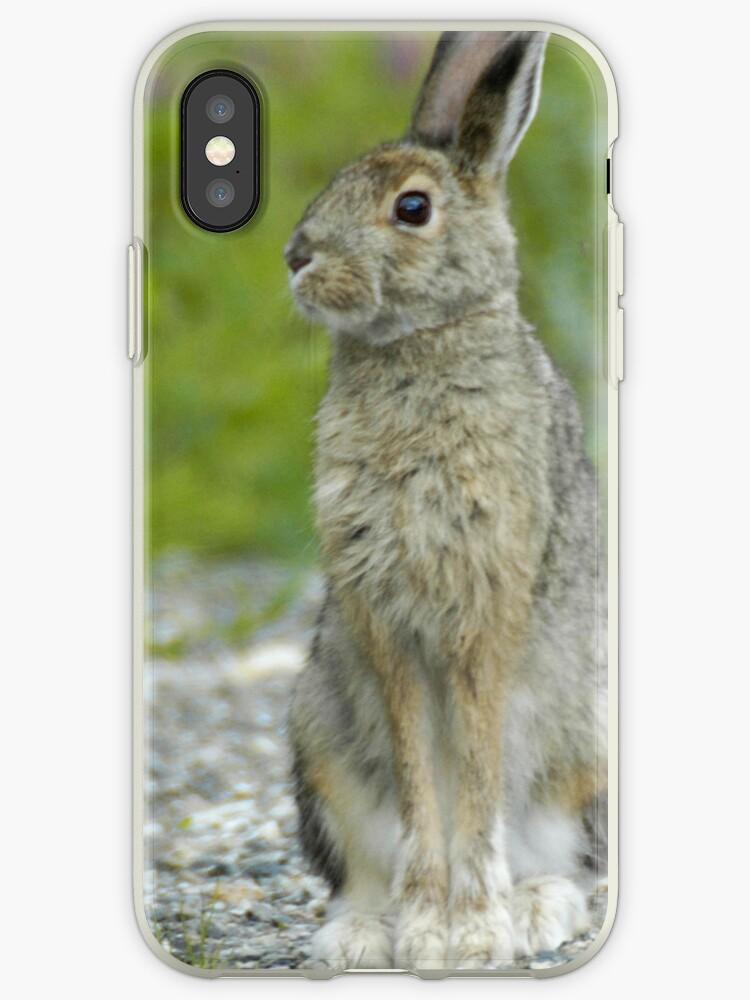 Snowshoe Hare in Alaska by pjwuebker