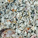 Shells Becoming Sand by pjwuebker