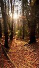 Autumn sunset by Marcel Ilie