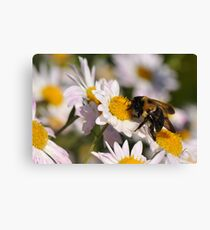 The Last Bumble Bee Canvas Print