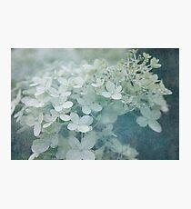 Veiled Beauty Photographic Print
