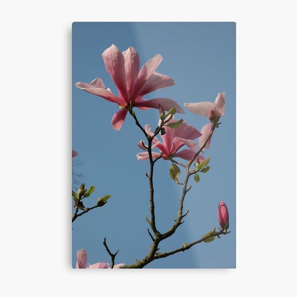 Magnolia, Kew Gardens Metal Print