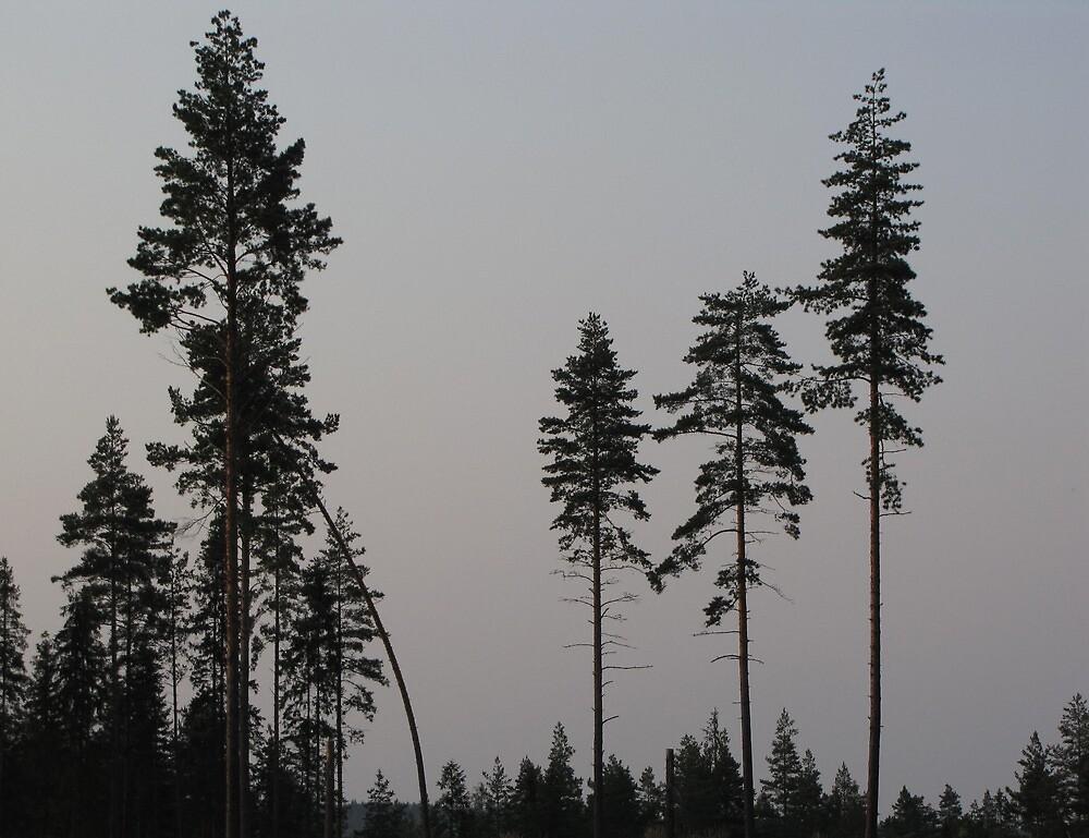 Pine Tree Still Life by ArtOfE