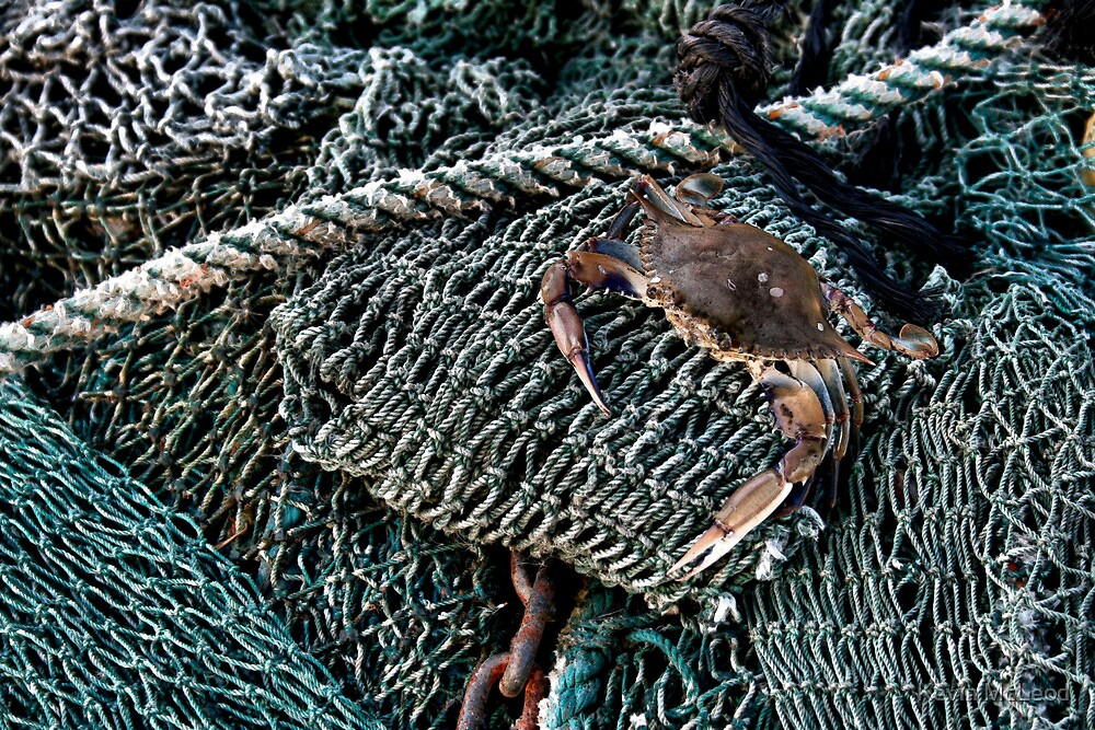 Crab Net by Kevin McLeod