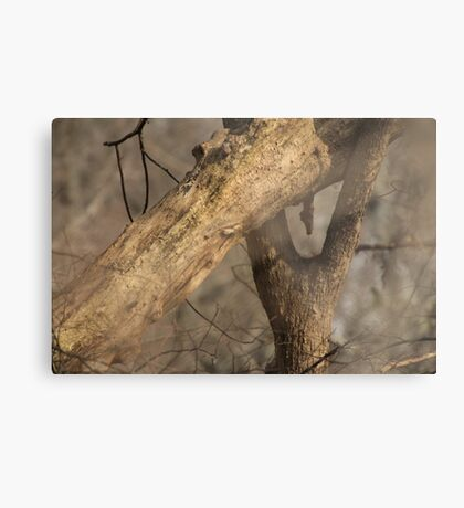 Tree Mating Caught in the Act Metal Print