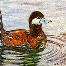 Ruddy Duck by lindybird