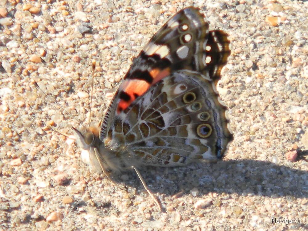 Butterfly With a Broken Leg by Navigator