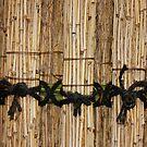 fence by yvesrossetti