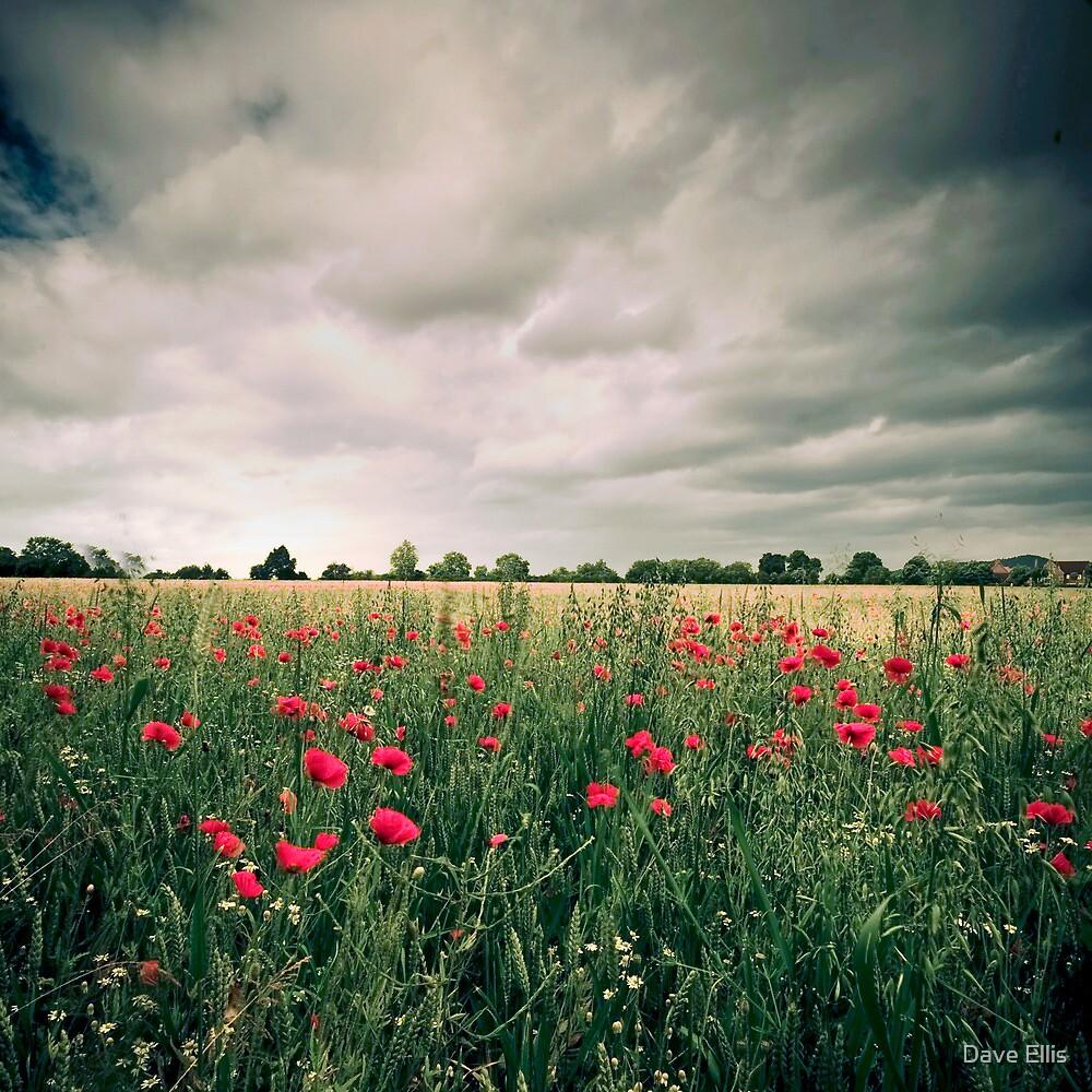 Dark Poppies by Dave Ellis