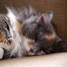 Cat nap.......! by Roy  Massicks