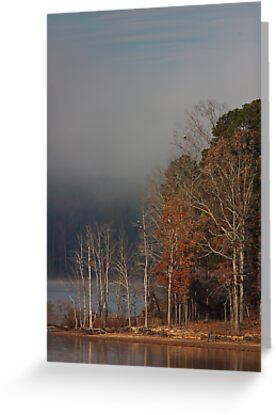 Three's A Crowd, Bald Eagles, Jordan Lake, NC by Denise Worden