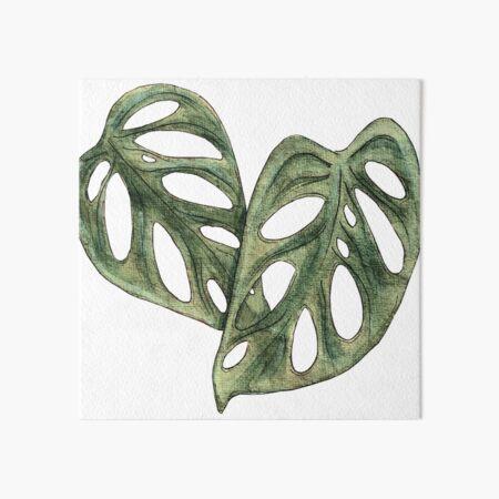 Monstera Adansonii Double Leaf Watercolor Art Board Print