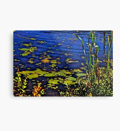 Beaver Dam Pond Metal Print