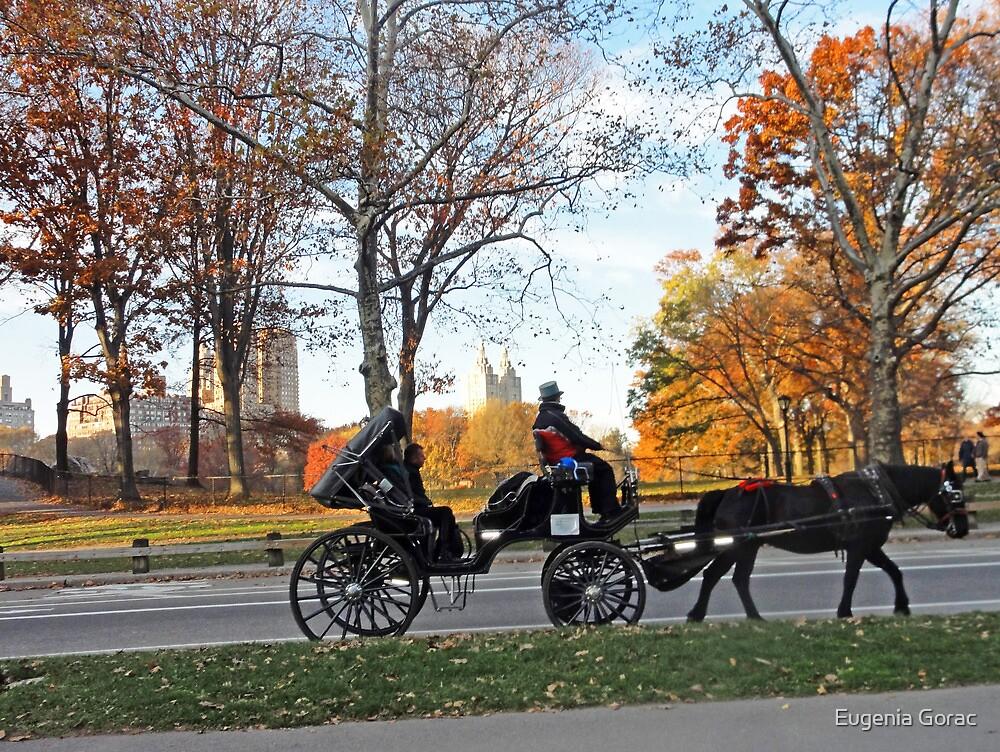 New York carriage by Eugenia Gorac