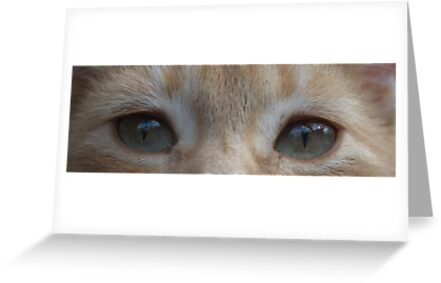 Lily eyes by Penny Fawver