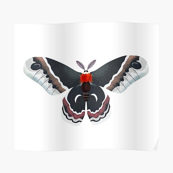 Cecropia moth Poster