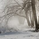 My Secret Winter by Gregory J Summers