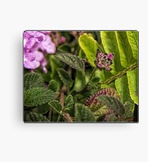 Flower (macro) Canvas Print