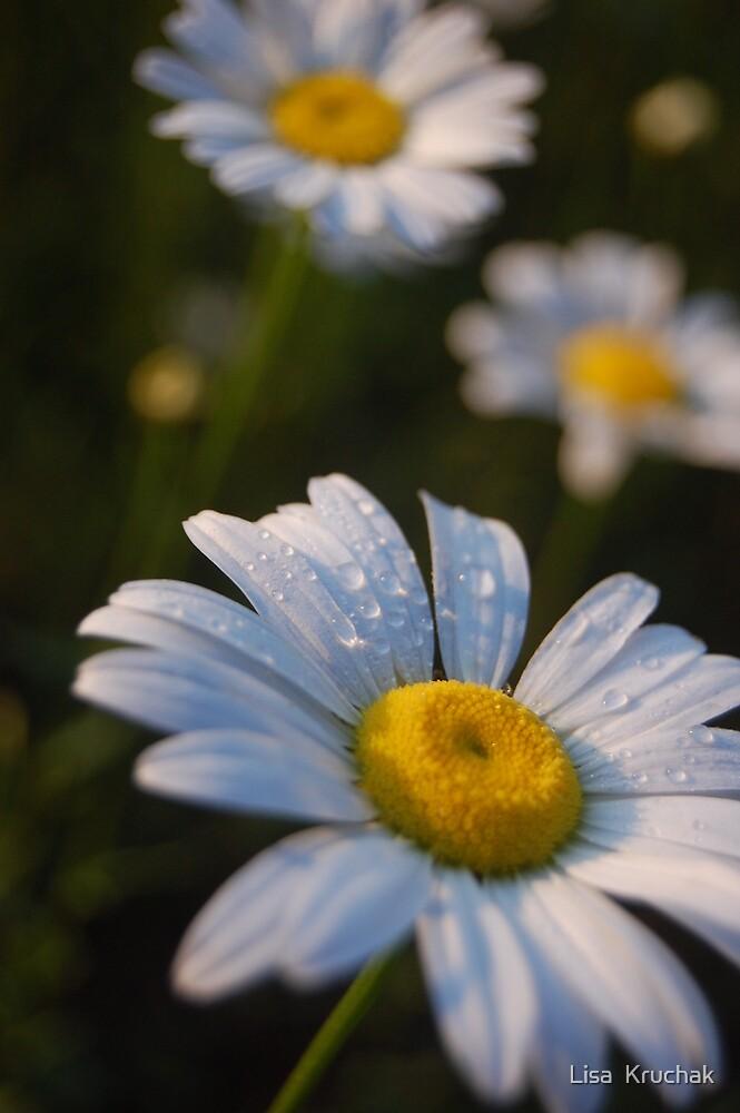sunrise daisy by Lisa  Kruchak