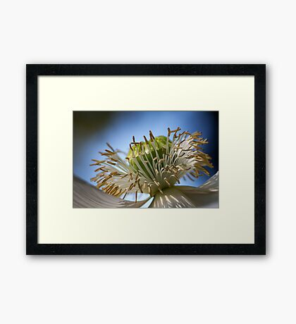 Spring Poppy Framed Print