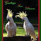Sulphur Crested Cockatoos - Drouin by Bev Pascoe