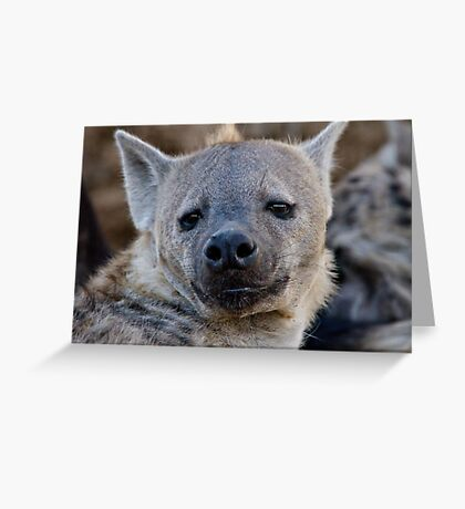 Eyes Of Interest Greeting Card