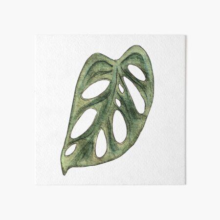 Monstera Adansonii Single Leaf Watercolor Art Board Print