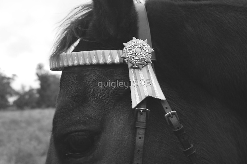 up close by quigley1993