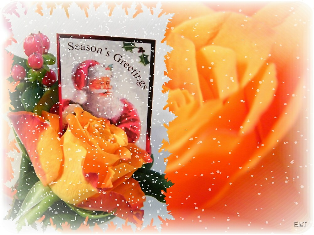 Rose card by ElsT