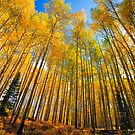 Mighty Aspens by kwreaves