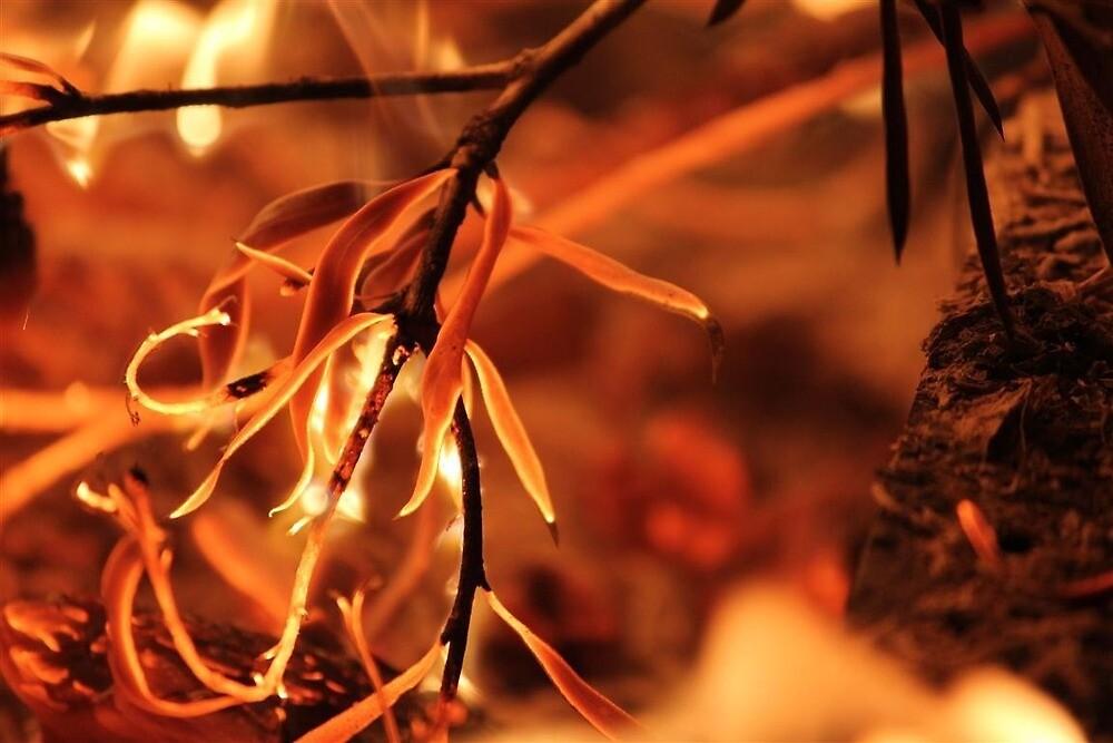 Fire glow by KevinVandermaat