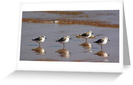 Four Little Birds by beavo