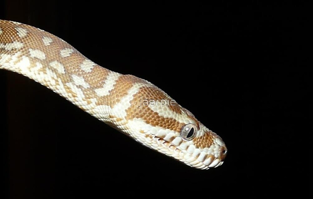 Snake by jaarpie