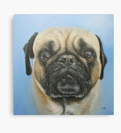 Pug on blue background Canvas Print
