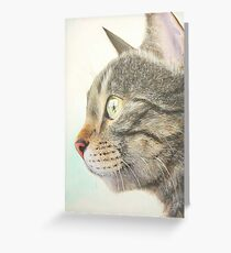 Tabby portrait Greeting Card