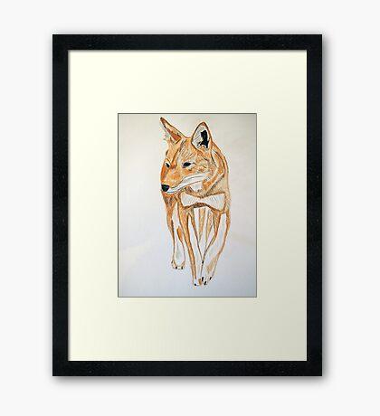 Ethiopian Wolf Framed Print