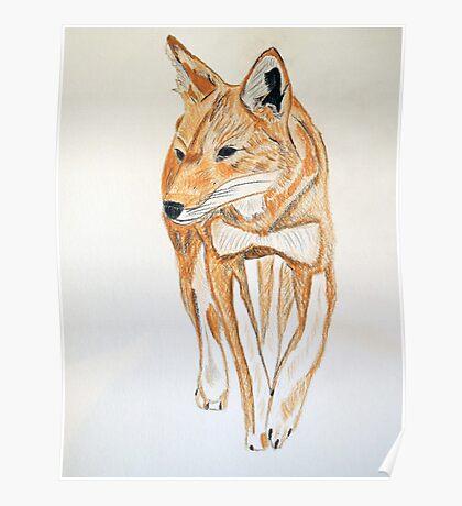 Ethiopian Wolf Poster