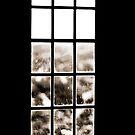 Window of lonliness by Richard Rusz