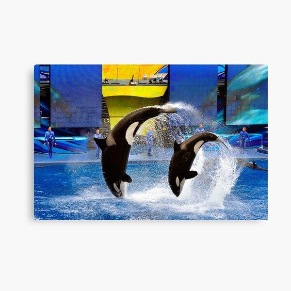 Sea World, Orlando, Florida Canvas Print