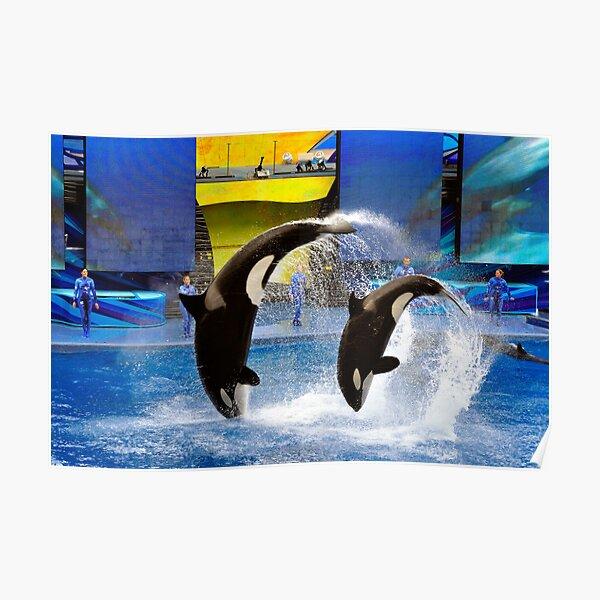 Sea World, Orlando, Florida Poster