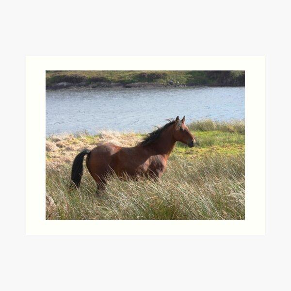Connemara Pony in the countryside Art Print