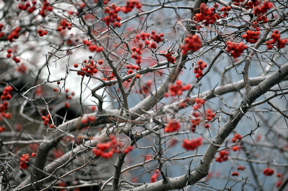 RED Flowers by hazarip