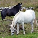 Connemara Pony Mare and Foal by ConnemaraPony