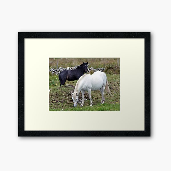 Connemara Pony Mare and Foal Framed Art Print