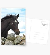 Connemara Pony Foal looking over a stone wall Postcards