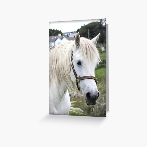 Grey Connemara Pony Mare Greeting Card