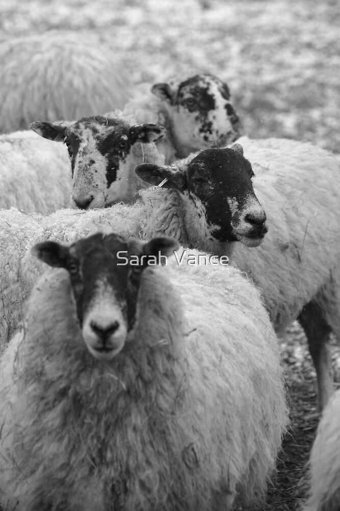 Stone sheep by Sarah Vance